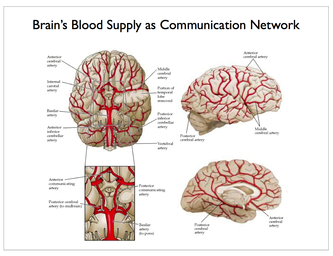 Scalable Neuroscience: Plenty of Room at the Bottom for ...