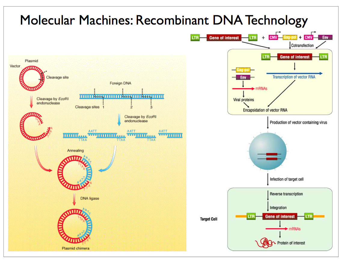 Scalable Neuroscience Plenty of Room at the Bottom for – Recombinant Dna Worksheet
