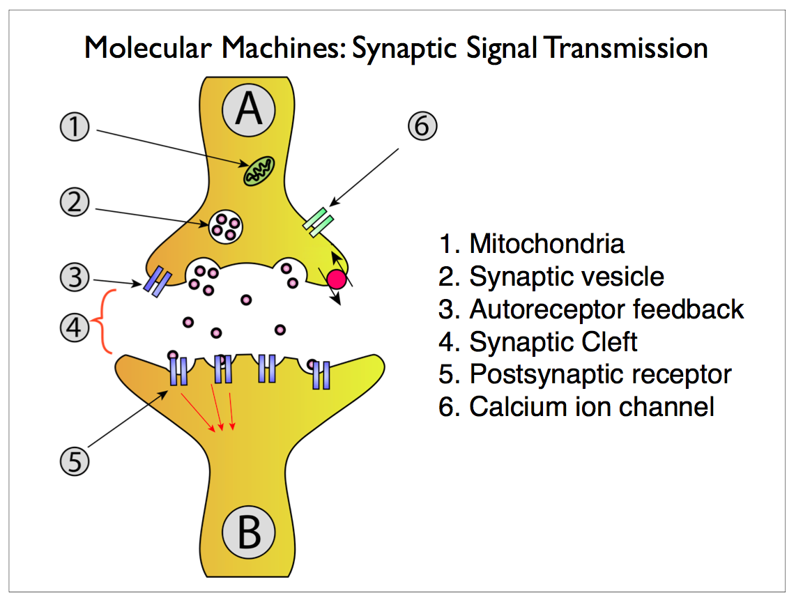 Scalable Neuroscience And The Brain Activity Mapping Project Here Is Final Schematic Somewhat Simplified